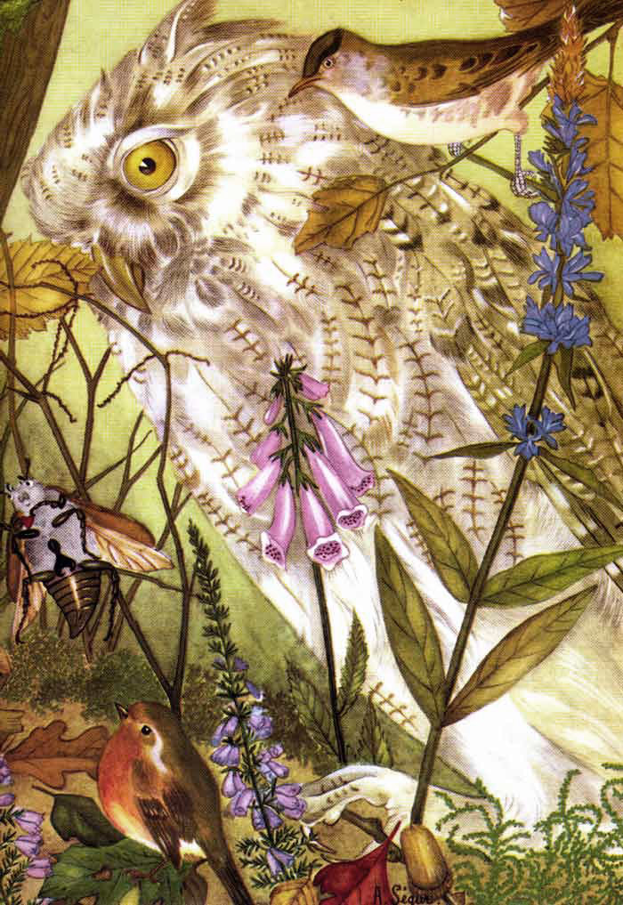 Owl from Thumbelina  The Fairy Tale Book  Adrienne Segur illustration