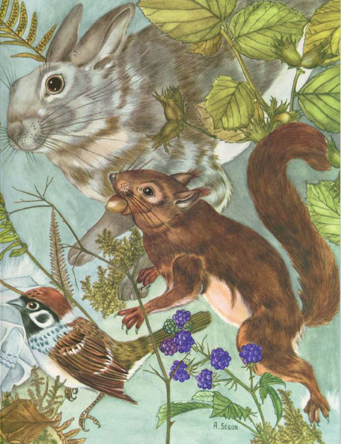 Squirrel Rabbit and Bird from Thumbelina  The Red Shoes  Adrienne Segur illustration